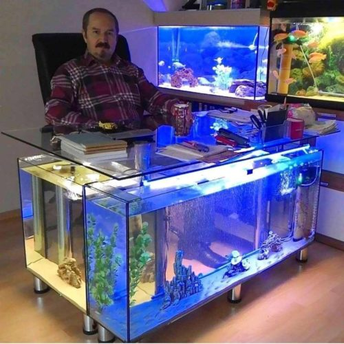 5 Reasons why you NEED an Aquarium RIGHT NOW!
