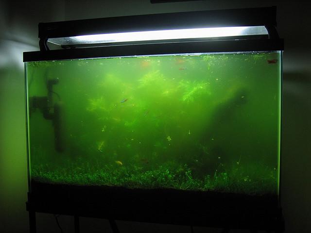 dirty-fish-tank