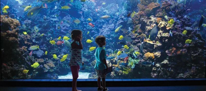 kids-aquarium