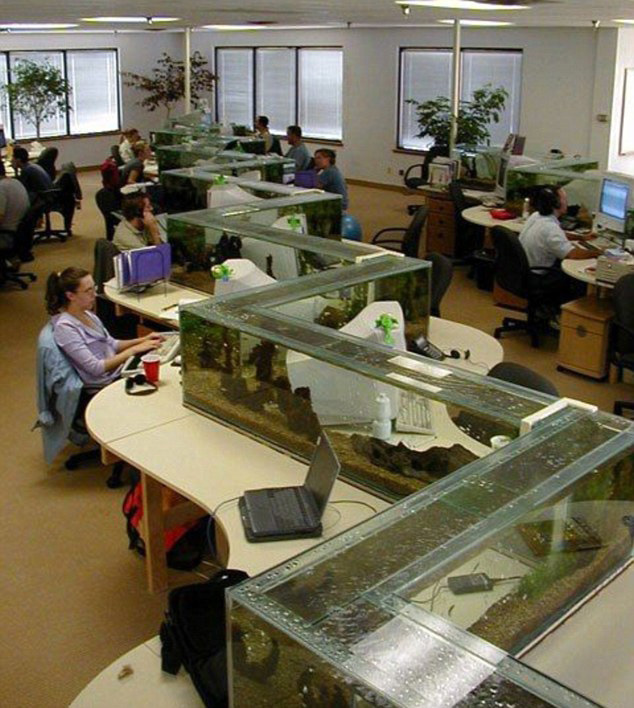 office-aquarium